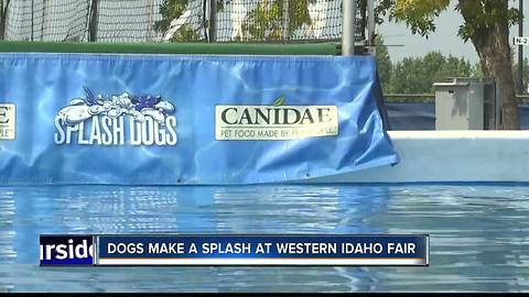 Splash Dogs making their way to Western Idaho Fair