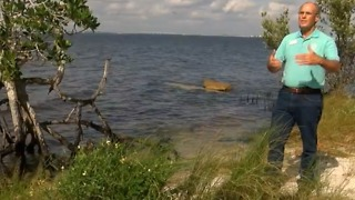 Discharges from Lake Okeechobee killing sea grass - Video