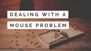 Dealing with a Mouse Problem - Video