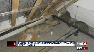 More than thirty cats rescued from one bedroom apartment - Video