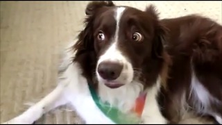 Dog has hilarious reaction to new toy