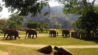 Rescued elephants find freedom and second chance
