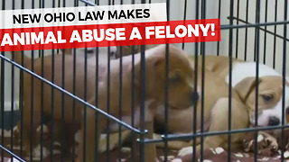 Animal Abuse Is Now A Felony In Ohio - Video