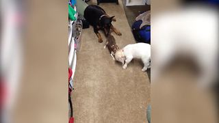 Unusual Four-Legged Family Plays Together