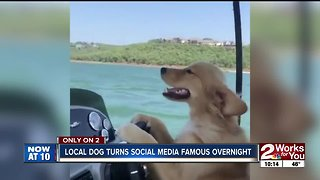 Candid video of Oklahoma dog becomes viral surprise