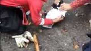 Argentinian Rescue Crew Pull Dog and Puppies From Muddy Drain - Video
