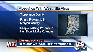 Mosquitoes with West Nile found in Tippecanoe County - Video