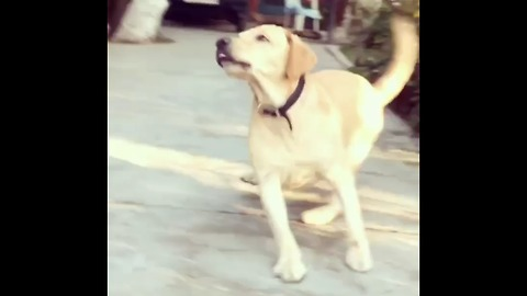 Dog thought it's a ball. Owner tricked him with lemon