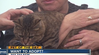 Pet of the day for December 24th - Video