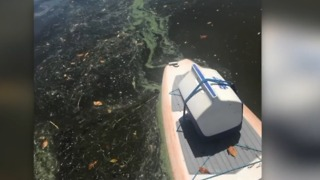 Reported algae spreading to St. Lucie County - Video