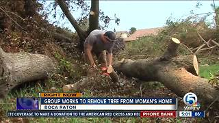 Story about fallen trees resonates with viewers