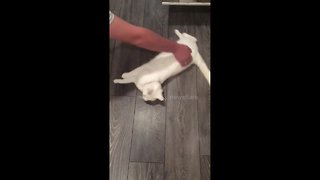Taking the cat for a spin: adorable video of pet's new hobby