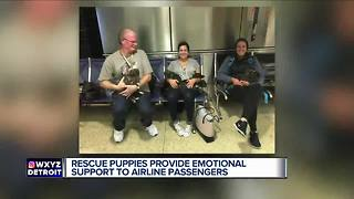 Rescue puppies provide emotional support to airline passengers - Video