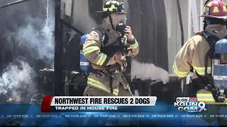 Crews rescue two dogs from burning house - Video