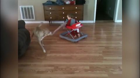 Cute dogs take baby for a spin