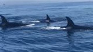 Whale Watching Tour Captures Rare Sighting Off San Diego - Video