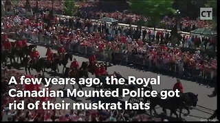 Canadian Mounties Send Peta-style Idiots Into Frenzy With 1 Wardrobe Change - Video
