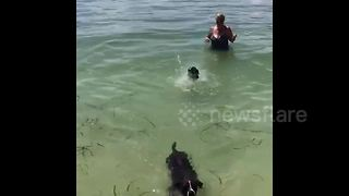 Puppy Teaches Baby Sister How To Swim