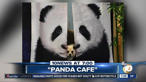 Cafe lets people mingle with baby pandas?