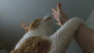 Stubborn cat meows until owner wakes up