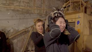 Seoul's Raccoon Cafe - Video