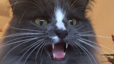 Crazy cat makes hilarious sounds while birdwatching