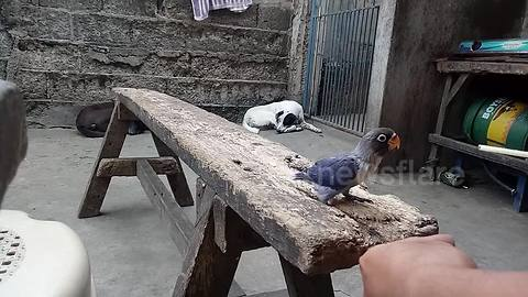 Cat comes out of nowhere to pounce on bird