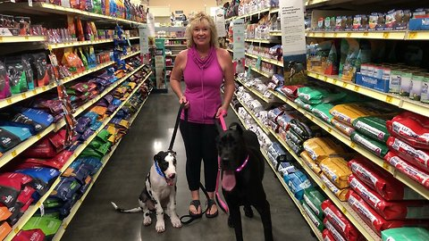 Socializing and Training Great Dane and Puppy at PetSmart Pet Store