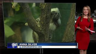 Free admission at Zoo Boise Saturday - Video