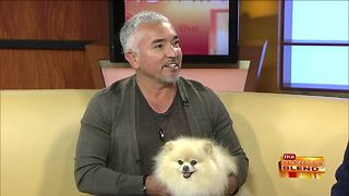 Canine Wisdom from Cesar Millan - Video