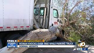 Woman knocks over tree while parking truck