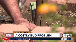 Neighbors dealing with a costly bug problem