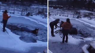 Horse accidentally falls into frozen backyard pool
