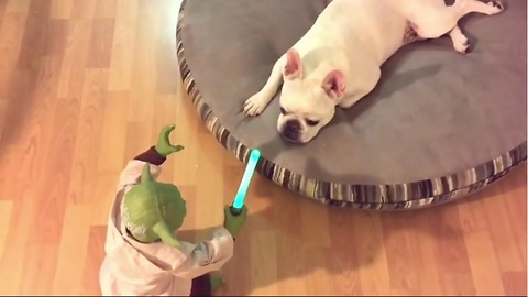 French Bulldog challenges Yoda, gets completely owned