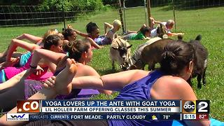 Goat yoga ups the ante on yoga experience - Video