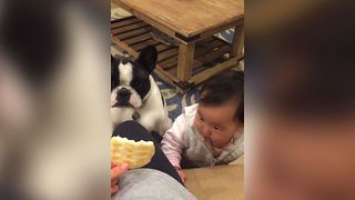 Baby and Dog Have Cookie Concentration - Video