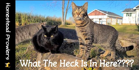 Homestead Cats Are Convinced There's Somethin' In This Stump