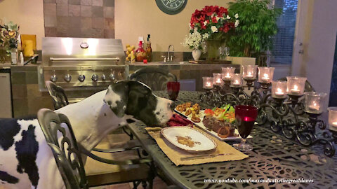 Great Dane Is Ready To Enjoy A Romantic Candlelight Dinner