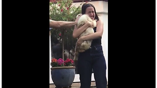 Boyfriend Surprises Girlfriend With New Puppy - Video