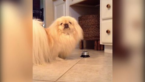 Fluffy Dog Rings Bell For Attention