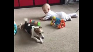 Adorable dog tries to teach baby to crawl