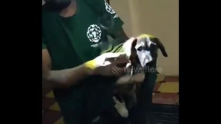 Volunteers rescue dog trapped between two walls in south India city - Video