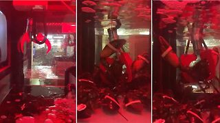 Shocking footage shows live lobsters being chosen for dinner by customers using toy grabber