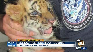 Bengal tiger cub seized at border - Video