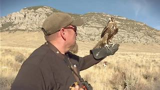 Falconry a 4,000-year-old sport thrives in Idaho - Video