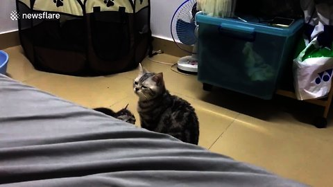 Mother Cat Gets Scared By Her Own Kitten