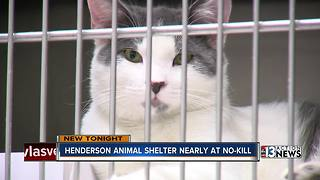 Henderson Animal Shelter almost a no-kill shelter - Video