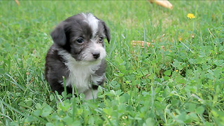 5 Maltese mix pups feel fear then elation when they touch grass for the first time - Video