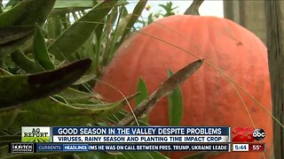 Local farmer expects a good season ahead for pumpkins despite problems
