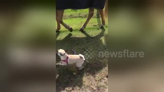 Just a dog taking a horse for a walk - Video